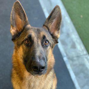 Omaha Dog Traning-